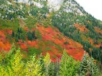 Fall Stevens Pass 2009