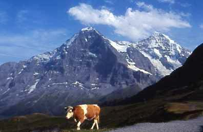 Eiger and  Swiss Local