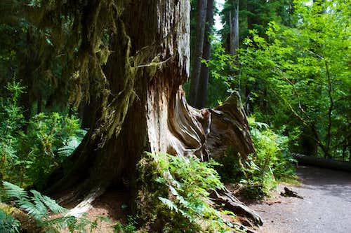 Living Driftwood?