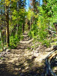 Trail to Bald Mountain