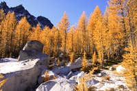 Flaming larch trees in the Enchantments
