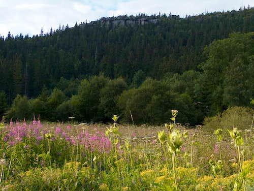 Flora in Góry Stołowe