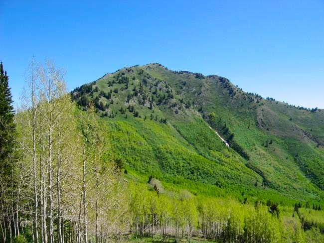View of Gobblers Knob from...