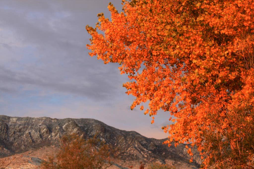 Fall or winter?