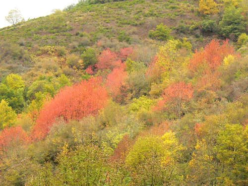 Autumnal colours in the Pyrenees