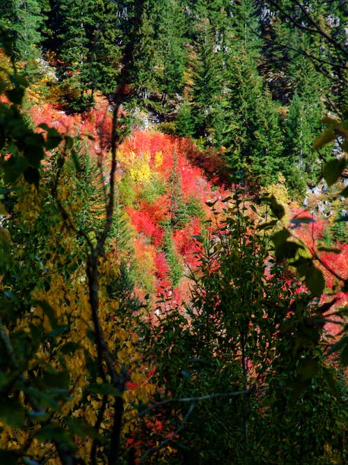 Fall color, North Cascades, WA