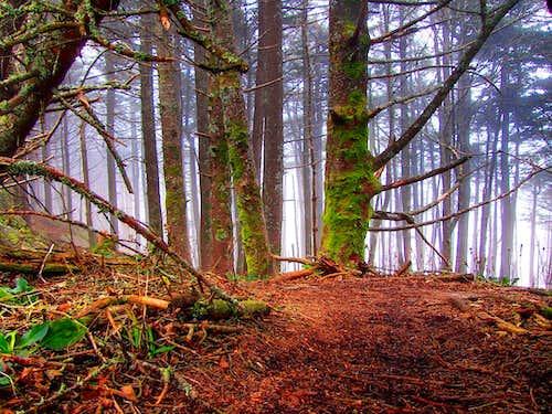 I love high mountain fir forest