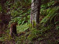 wildcat creek in shade