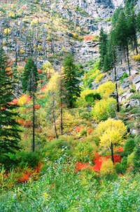 Colors of the wilderness...