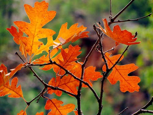 Bio Degradable Leaves