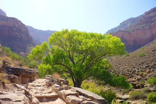 Tree at Indian Garden