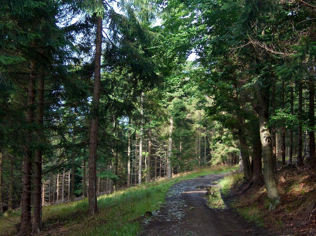 Trail on the south side of Wielka Sowa