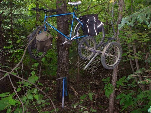 Bike and trailer on trees