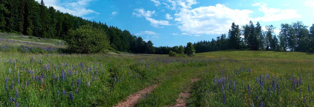 Trails on Waligóra