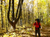 Fall on the Crest Trail
