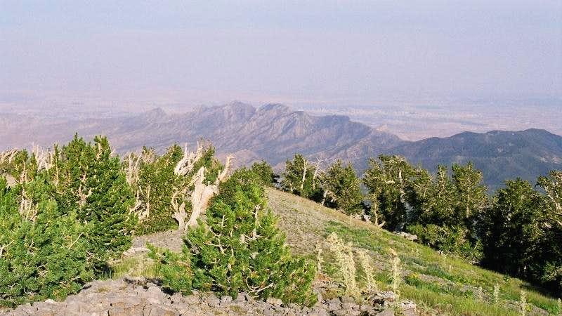 Las Vegas - from Griffith Peak