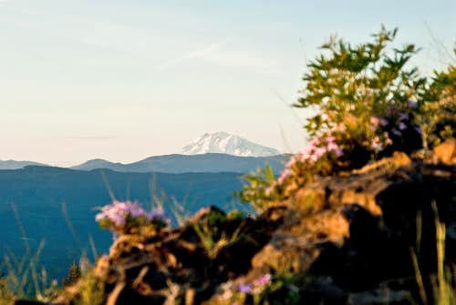 Mt. Adams View