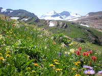 Floral Park Wildflowers