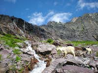 Mountain Goats below Comeau Pass