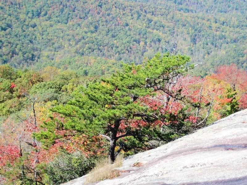 Pine on Cliff