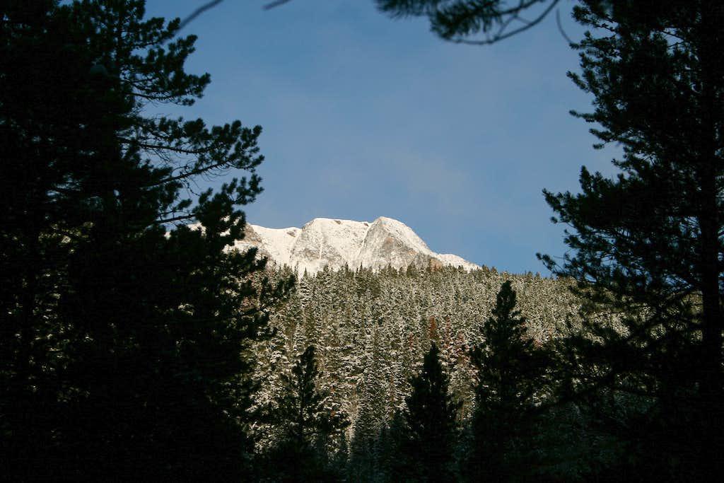 Ypsilon Framed by Forest
