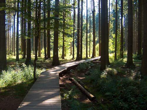 Rejvíz, trail to the peat bog