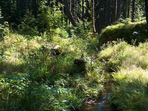 Rejvíz, peat bog vegetation