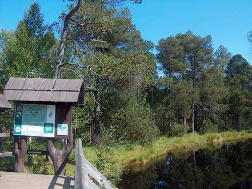 Rejvíz, at the peat bog lake