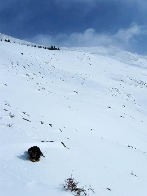 Dog, Mountain