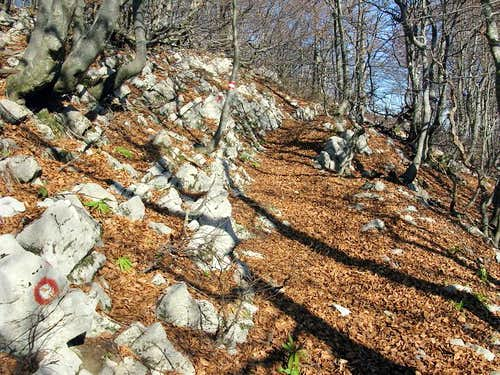 Heading towards Snježnik ridge