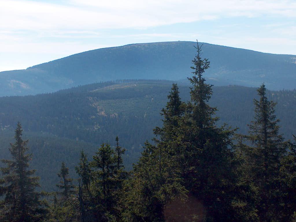 Śnieżnik from Czarna Góra