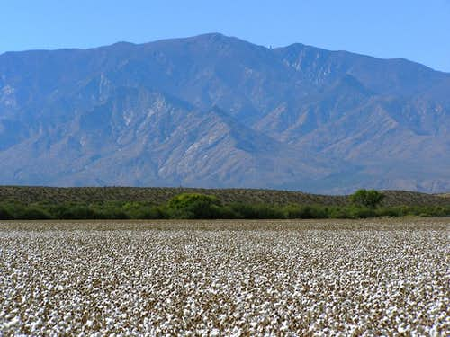 Mt. Graham and cotton field