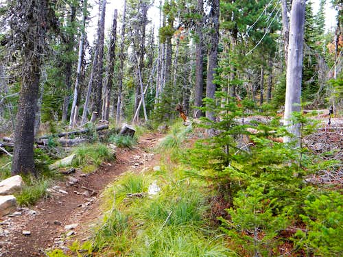 The Lower South Chilco Trail