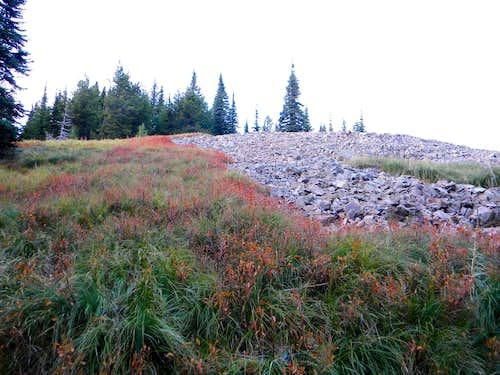 Scene on the Upper Trail