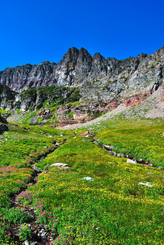 meadows north of Swiftcurrent Glacier Basin
