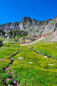 meadows north of Swiftcurrent Glacier Basin