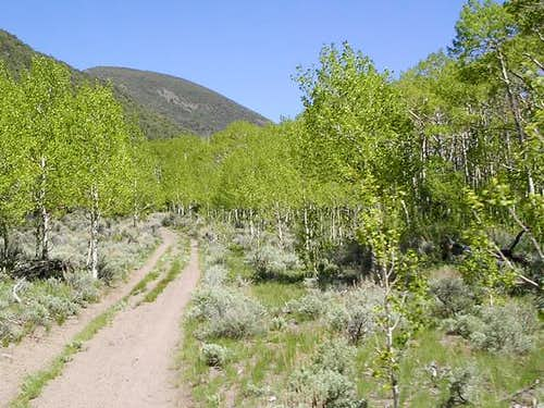 A beautiful aspen grove on...