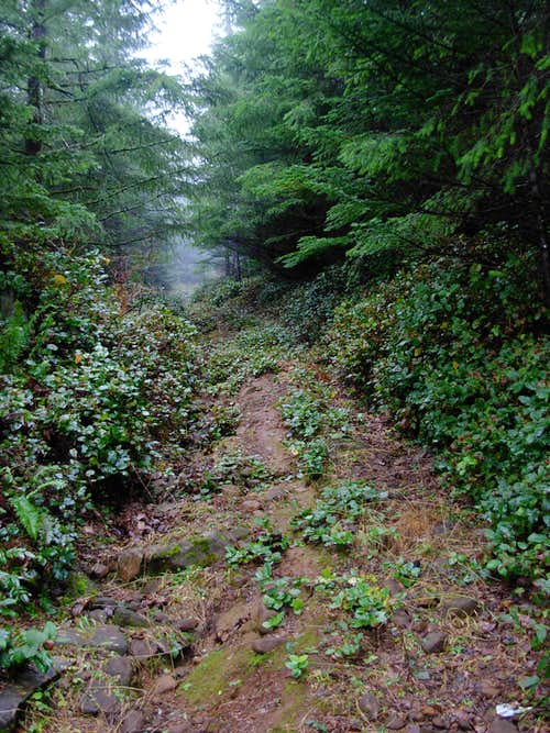 Larch Mountain Summit Road