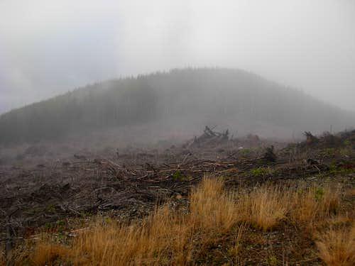 Fog On Larch Mountain
