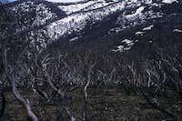 Burnt vegetation along your way