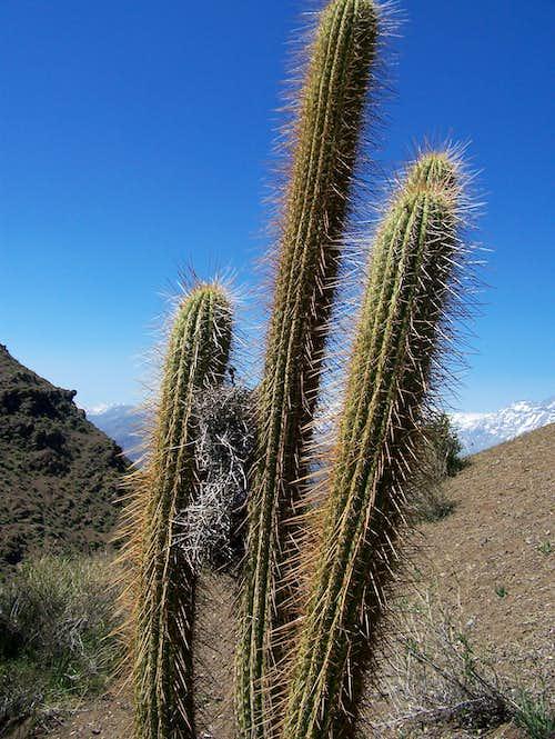 Nest on a cactus