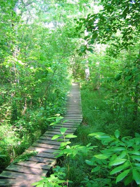 An example of the boardwalks...