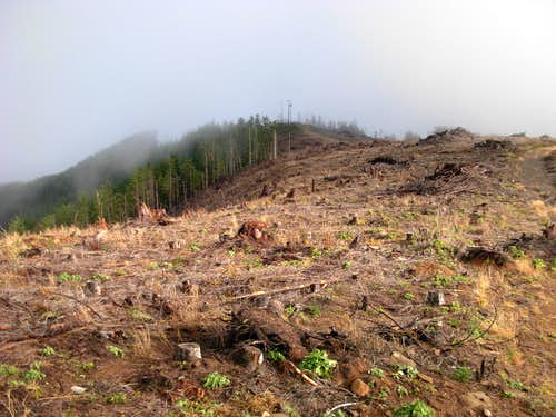 Black Hills Clearcut