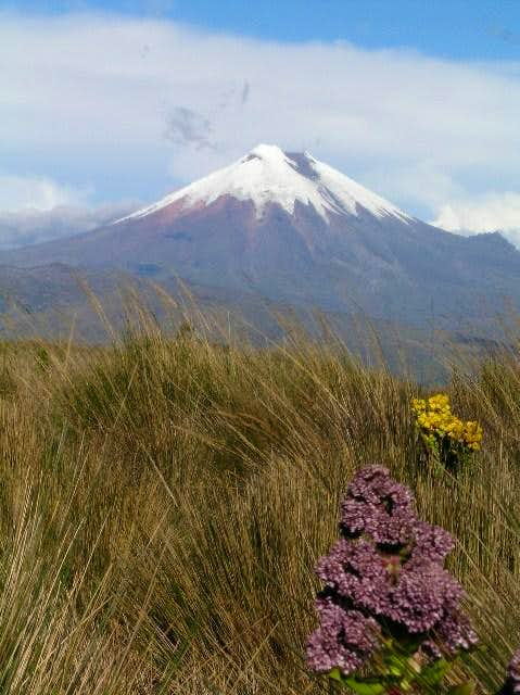 Cotopaxi from the west. Std...