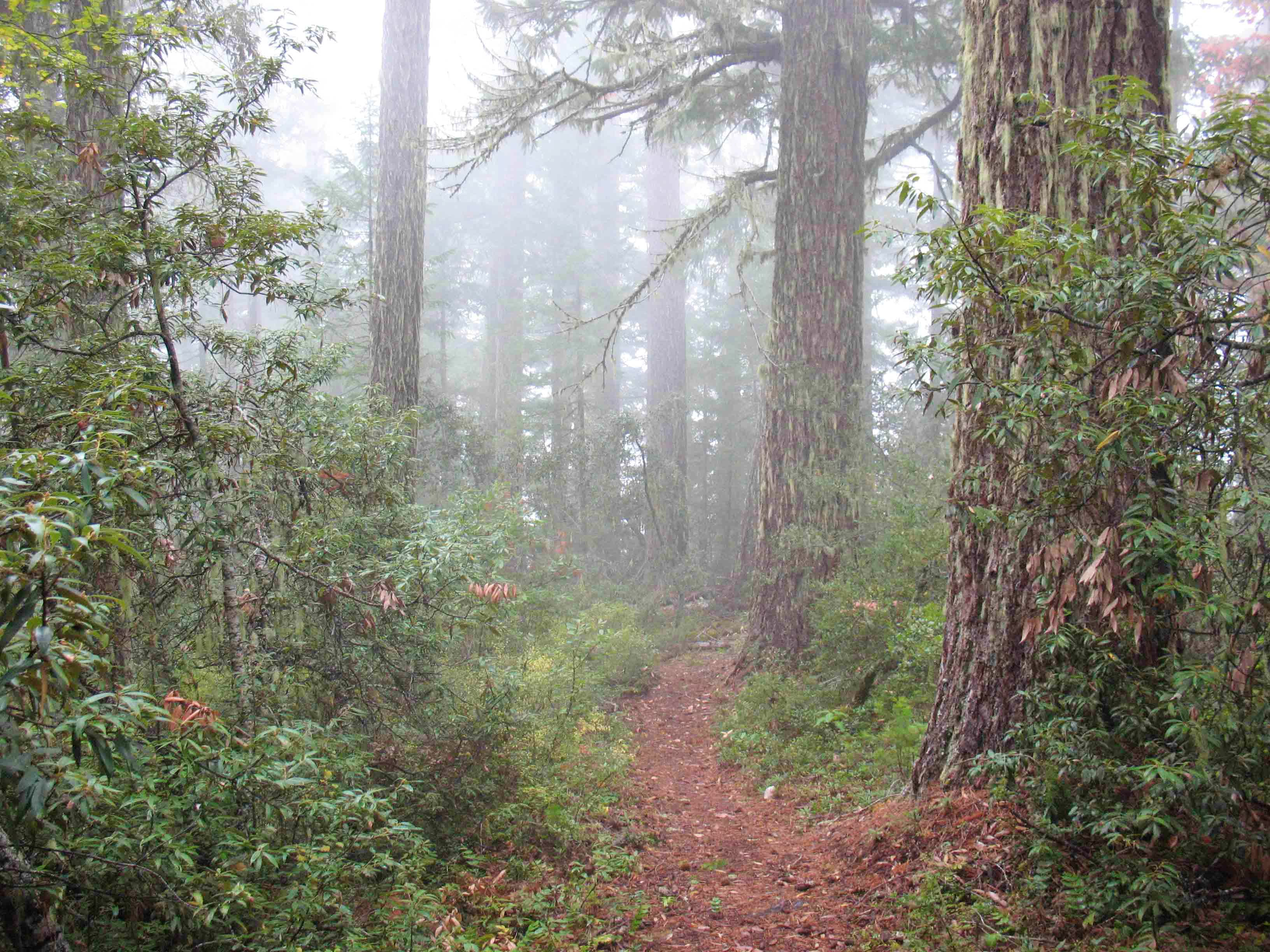 Kerby Peak Trail in the FOG