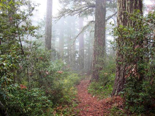 Kerby Peak Trail in the FOG