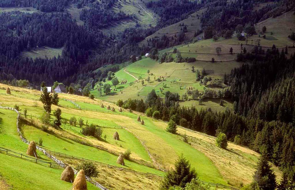 Golden meadows