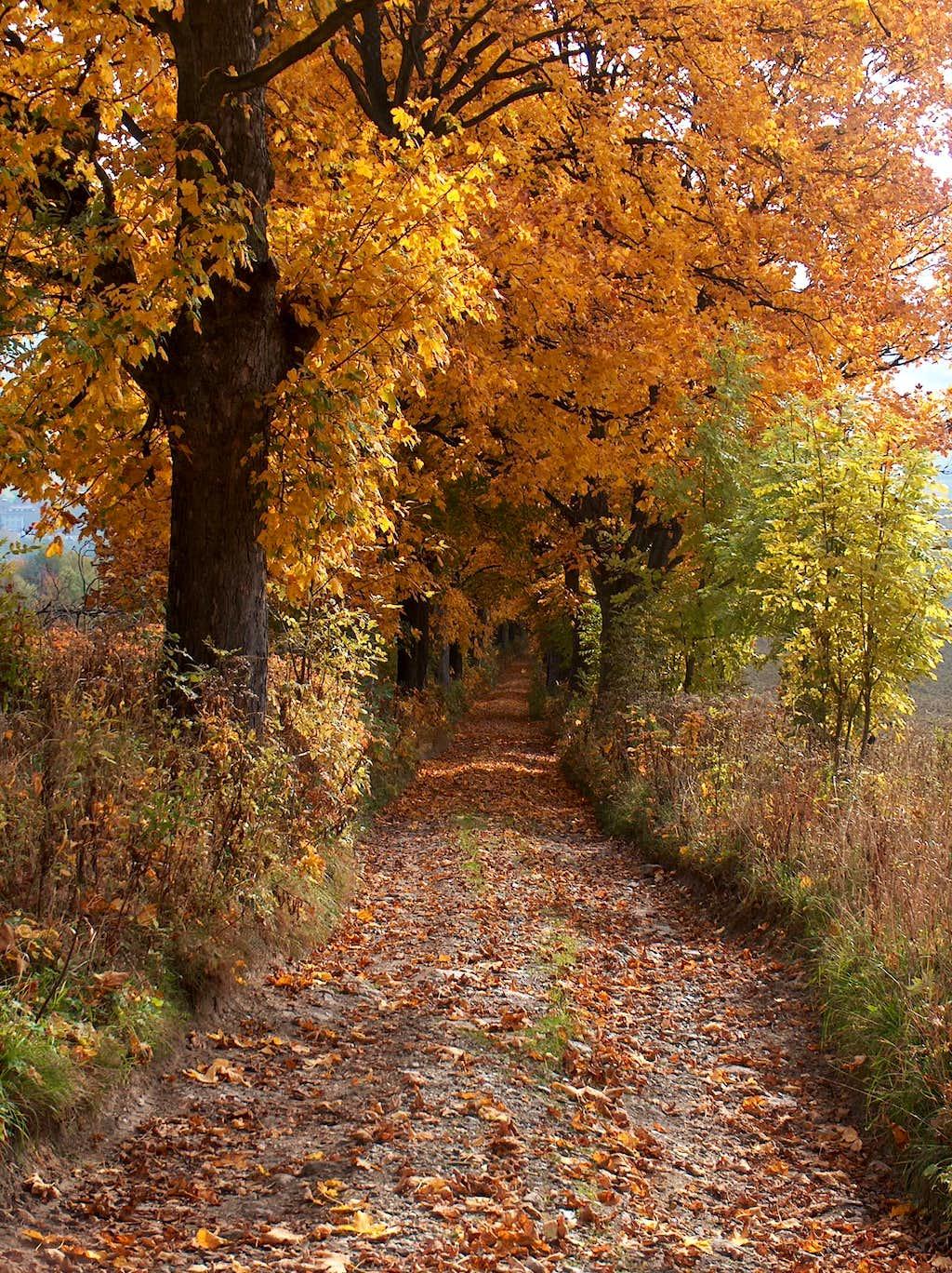 Going down to Horní Rokytnice