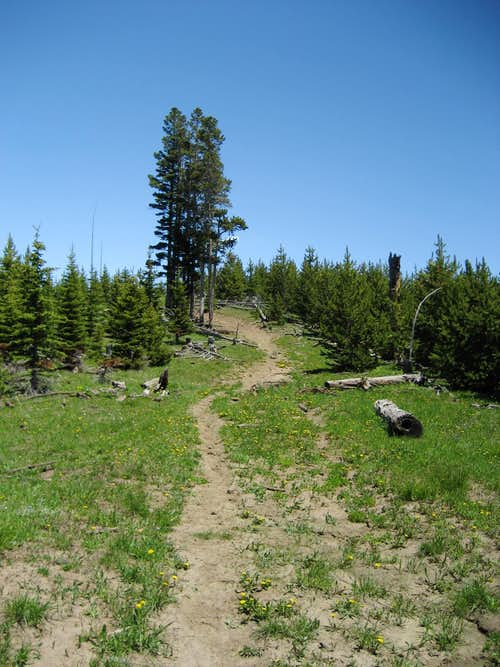 Trail on Burnt Mountain