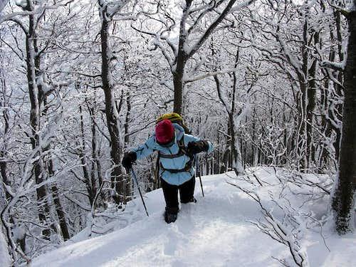 Winter on Snježnik mountain